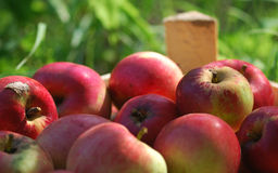 Red apples in the crate stock images