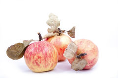 Red apples with dry leaves Royalty Free Stock Images