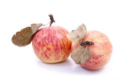 Red apples with dry leaves Stock Photography