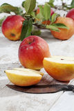 Red apples, Ecolette on branch with leaves Royalty Free Stock Images