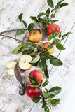 Red apples, Ecolette on branch with leavses Royalty Free Stock Photos