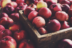 Red apples in farmhouse style wooden crate Royalty Free Stock Image