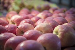 Red apples fruit. Red apples fresh garden fruit, shot in perspective Royalty Free Stock Photos
