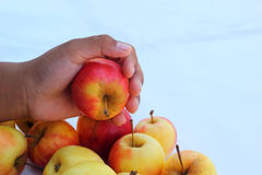 Red apples fresh in hand. Stock Images