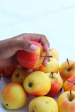 Red apples fresh in hand. Royalty Free Stock Photography