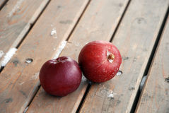 Red apples, frost and snow Royalty Free Stock Photos
