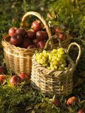Red apples and grapes royalty free stock photography