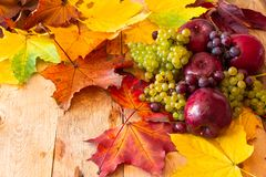 Red Apples with Grapes. Red Juicy Ripe Apples with Grapes and Autumn Maple Leaves on a Wooden Background royalty free stock photography