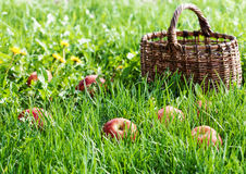 Red apples in the grass Stock Photos