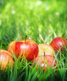 Red apples on green grass Royalty Free Stock Images