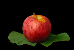 Red apples with green leafs Stock Photography
