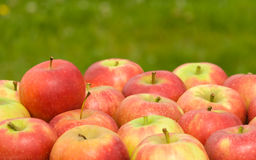 Red apples on green natural background Royalty Free Stock Photos