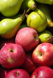 Red apples and green pears Royalty Free Stock Image