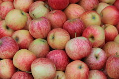 Red apples. A Group of red apples Stock Images
