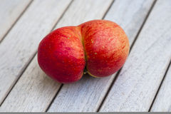 Red apples grown together Stock Image