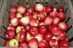 Red apples. Image of red apple sin a crate Stock Photo