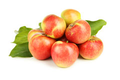 Red apples isolated on white. Stock Photography