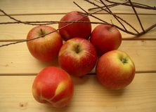 Red apples juicy straight from the garden Stock Images