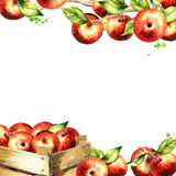 Red apples and leaves square background. Watercolor template Stock Photos