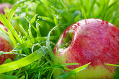 Red  apples lie on a green grass Stock Photography