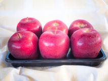 Red apples in the morning . Stock Photography