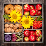 Red apples, nuts, flowers, sunflowers, dried apples Stock Image