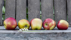 Red apples with old wood background. And details Stock Images