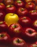 Red apples but one yellow. Fruits and concept of uniqueness stock image