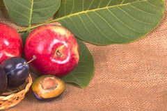 Red apples and plums Stock Image