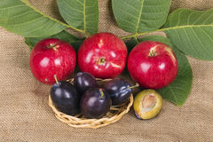 Red apples and plums Stock Photos