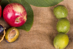 Red apples, plums and walnuts Royalty Free Stock Image