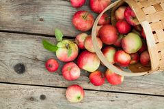 Red Apples in pottle on wooden background