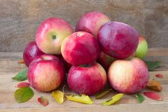 Red apples. Red lobo apples on wooden royalty free stock photo
