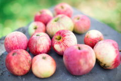 Red apples on a rock Royalty Free Stock Images