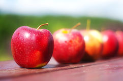 Red apples. In a row Royalty Free Stock Photos