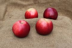 Red apples on the sacking. Fixed with a close-up photo shooting royalty free stock photo