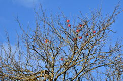 Red apples in the sky Royalty Free Stock Photos
