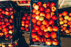 Red apples in storage Stock Photo