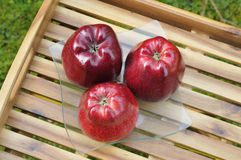 3 red apples Stock Images