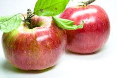 Red Apples. Two fresh red natural apple Stock Photo