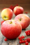 Red apples and viburnum. Stock Image
