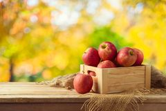 Red apples in wooden box on table. Autumn and fall harvest background Stock Photos