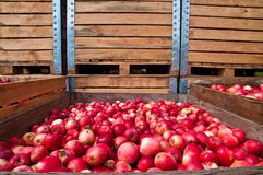 Red apples and wooden boxes Royalty Free Stock Images