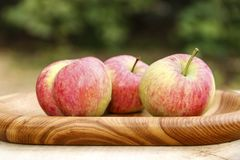 Red apples on wooden plate. Still-life three red ripe apples on wooden plate close-up stock images
