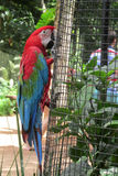 Red Ara Parrot Stock Photography