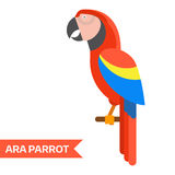 Red Ara Tropical Parrot Icon. Ara parrot. Red ara  illustration. Exotic ara bird in flat design. Popular bird species collection. Geometrical ara isolated on Royalty Free Stock Photo