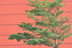 Red architecture background and green plant Royalty Free Stock Images