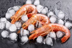 Red argentine shrimps head on stock photography