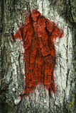 Red arrow on the tree Royalty Free Stock Photo