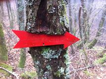 Red arrow. On the tree in the woods Royalty Free Stock Photos